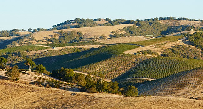 Anna's Estate Vineyard