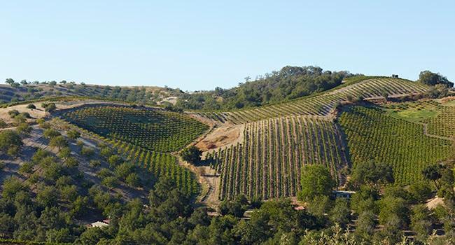 Anna's Estate Vineyard