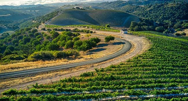 Estate Vineyards