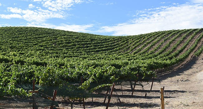 HMR Vineyard