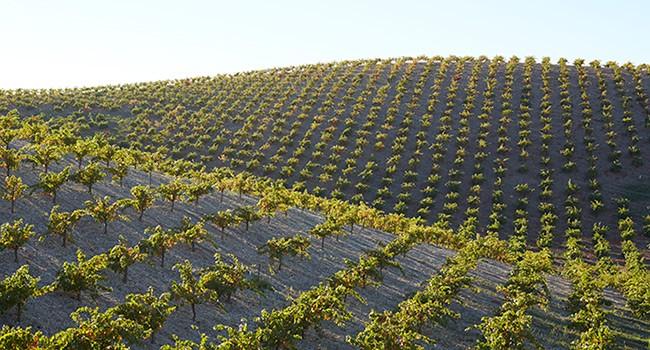 Michael's Estate Vineyard