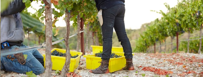 Sustainable Winemaking